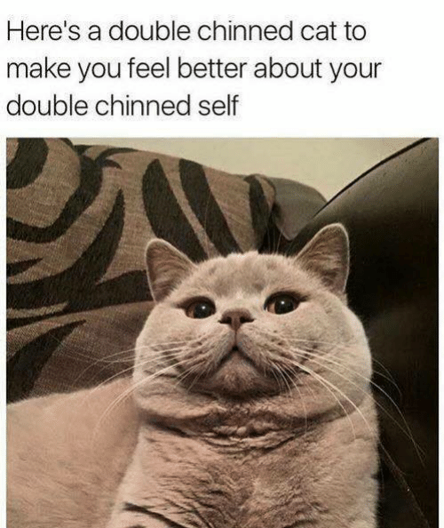 Cat, Make, and Double: Here's a double chinned cat to  make you feel better about your  double chinned self