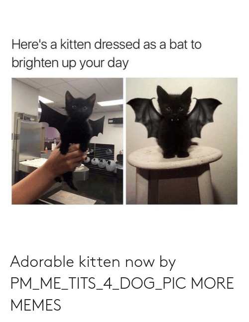 tits: Here's a kitten dressed as a bat to  brighten up your day Adorable kitten now by PM_ME_TITS_4_DOG_PIC MORE MEMES