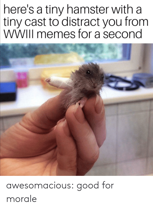 Heres: here's a tiny hamster with a  tiny cast to distract you from  WWIII memes for a second awesomacious:  good for morale