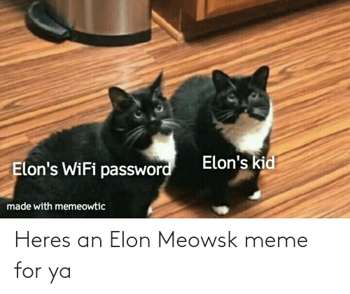 elon: Heres an Elon Meowsk meme for ya
