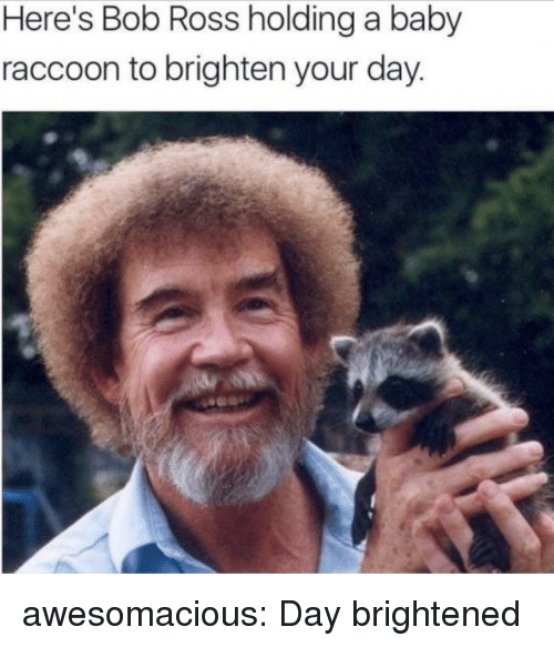 Tumblr, Blog, and Bob Ross: Here's Bob Ross holding a baby  raccoon to brighten your day awesomacious:  Day brightened