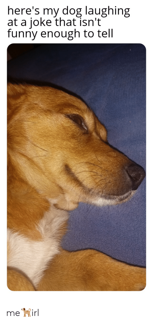 Dog Laughing: here's my dog laughing  at a joke that isn't  funny enough to tell me🐕irl