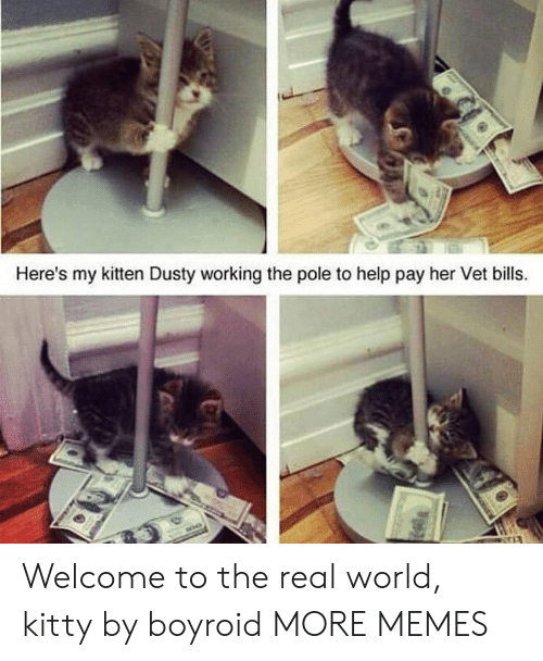 kitten: Here's my kitten Dusty working the pole to help pay her Vet bills. Welcome to the real world, kitty by boyroid MORE MEMES