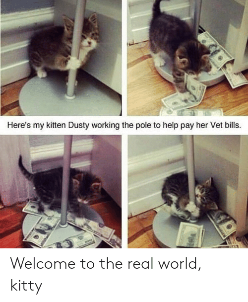 kitten: Here's my kitten Dusty working the pole to help pay her Vet bills. Welcome to the real world, kitty