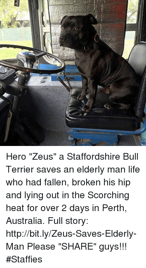 "Memes, 🤖, and Fallen: Hero ""Zeus"" a Staffordshire Bull Terrier saves an elderly man life who had fallen, broken his hip and lying out in the Scorching heat for over 2 days in Perth, Australia. Full story: http://bit.ly/Zeus-Saves-Elderly-Man Please ""SHARE"" guys【ツ】!!! #Staffies"