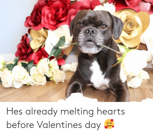 melting: Hes already melting hearts before Valentines day 🥰