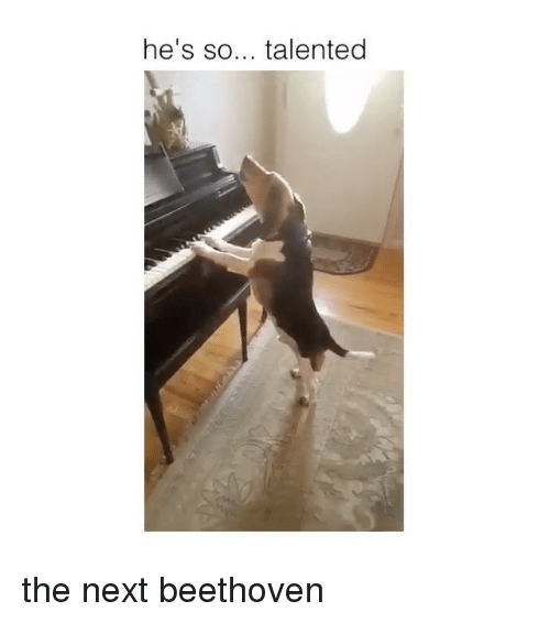 Beethoven, Next, and Hes: he's so... talented the next beethoven