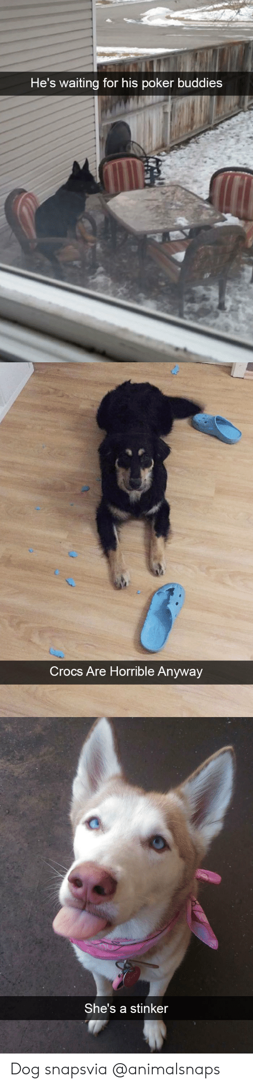 Crocs, Target, and Tumblr: He's waiting for his poker buddies   Crocs Are Horrble Anyway   She's a stinker Dog snapsvia @animalsnaps