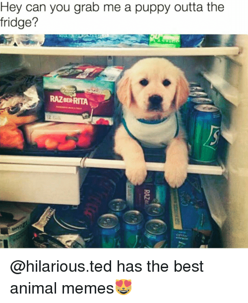 best animes: Hey can you grab me a puppy outta the  fridge?  RAZBERRITA @hilarious.ted has the best animal memes😻