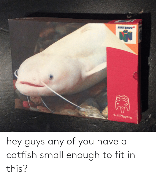A Catfish: hey guys any of you have a catfish small enough to fit in this?