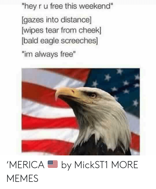 """Eagle: """"hey r u free this weekend""""  [gazes into distance]  wipes tear from cheek]  bald eagle screeches]  """"im always free"""" 'MERICA 🇺🇸 by MickST1 MORE MEMES"""