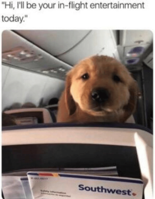 """Flight, Southwest, and Today: """"Hi, I'll be your in-flight entertainment  today.""""  Southwest"""