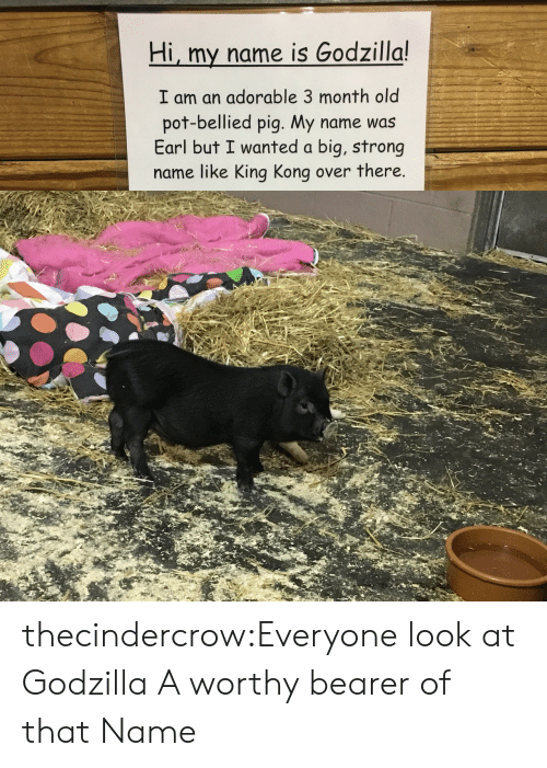 pot: Hi, my name is Godzilla!  I am an adorable 3 month old  pot-bellied pig. My name was  Earl but I wanted a big, strong  name like King Kong over there. thecindercrow:Everyone look at Godzilla  A worthy bearer of that Name