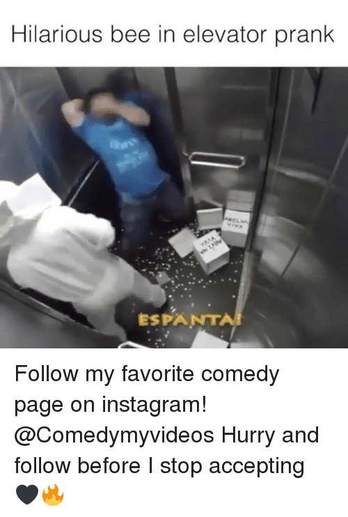 Instagram, Memes, and Prank: Hilarious bee in elevator prank  ESPANTA Follow my favorite comedy page on instagram! @Comedymyvideos Hurry and follow before I stop accepting 🖤🔥