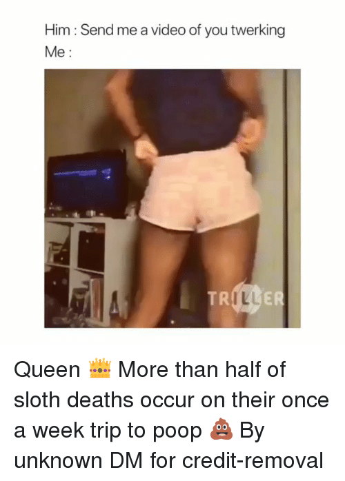 Twerking: Him : Send me a video of you twerking  Me  ILL Queen 👑 More than half of sloth deaths occur on their once a week trip to poop 💩 By unknown DM for credit-removal