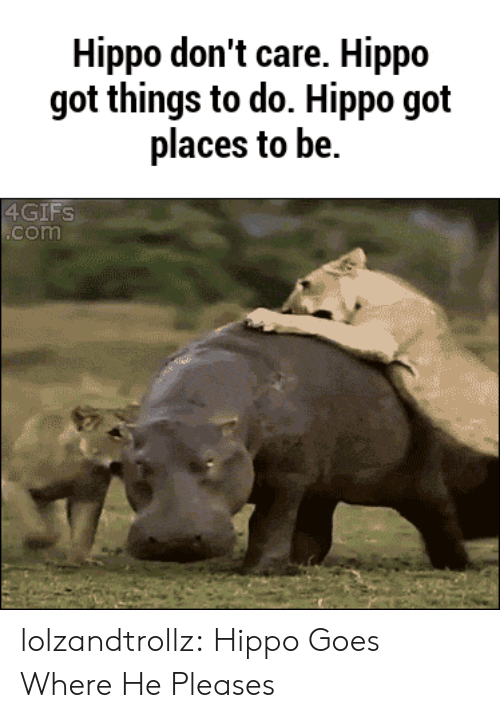 Tumblr, Blog, and Got: Hippo don't care. Hippo  got things to do. Hippo got  places to be.  4GIFS  .com lolzandtrollz:  Hippo Goes Where He Pleases