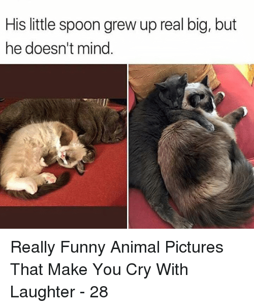 little spoon: His little spoon grew up real big, but  he doesn't mind Really Funny Animal Pictures That Make You Cry With Laughter - 28