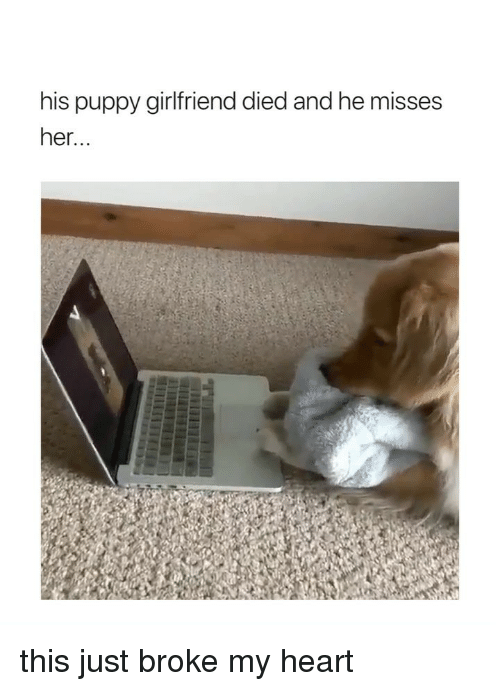 Heart, Puppy, and Girl Memes: his puppy girlfriend died and he misses  her... this just broke my heart
