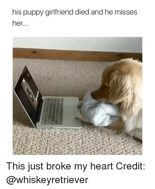 Memes, Heart, and Puppy: his puppy girlfriend died and he misses  her.. This just broke my heart Credit: @whiskeyretriever