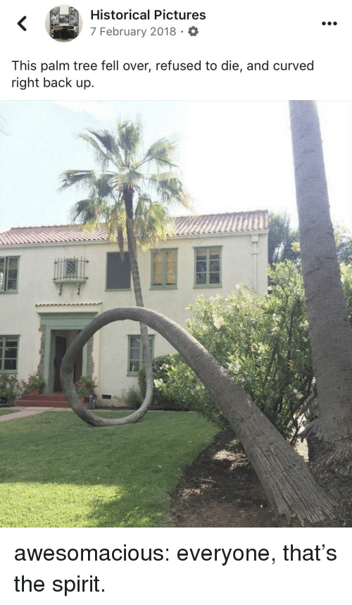 Tumblr, Blog, and Http: Historical Pictures  7 February 2018 O  This palm tree fell over, refused to die, and curved  right back up.  C) awesomacious:  everyone, that's the spirit.