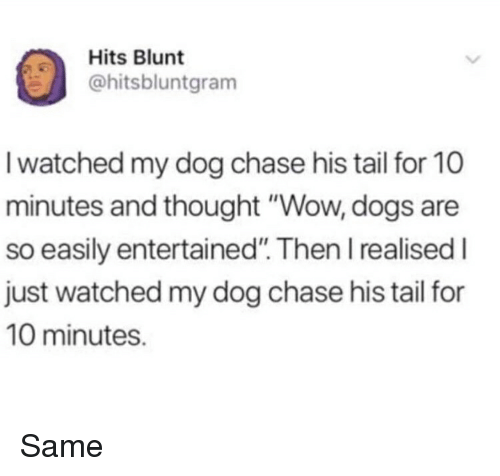 """Dogs, Funny, and Wow: Hits Blunt  hitsbluntgram  I watched my dog chase his tail for 10  minutes and thought """"Wow, dogs are  so easily entertained"""". Then I realised I  just watched my dog chase his tail for  10 minutes. Same"""