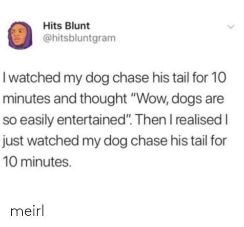 "Dogs: Hits Blunt  @hitsbluntgram  I watched my dog chase his tail for 10  minutes and thought ""Wow, dogs are  so easily entertained"". Then I realised I  just watched my dog chase his tail for  10 minutes. meirl"