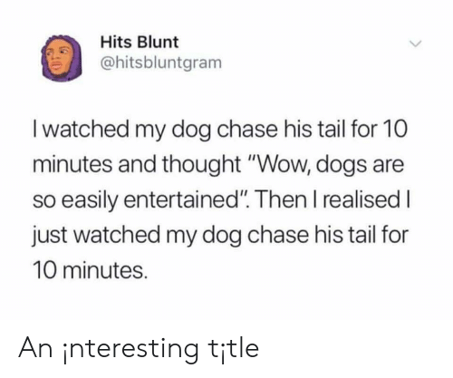 "Dogs, Wow, and Chase: Hits Blunt  ohitsbluntgram  I watched my dog chase his tail for 10  minutes and thought ""Wow, dogs are  so easily entertained"". Then I realised I  just watched my dog chase his tail for  10 minutes. An ¡nteresting t¡tle"