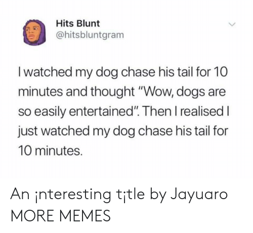 """Entertained: Hits Blunt  ohitsbluntgram  I watched my dog chase his tail for 10  minutes and thought """"Wow, dogs are  so easily entertained"""". Then I realised I  just watched my dog chase his tail for  10 minutes. An ¡nteresting t¡tle by Jayuaro MORE MEMES"""