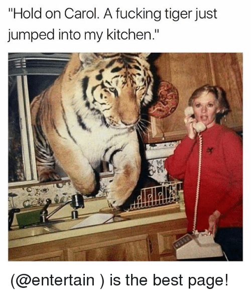 "Carols: ""Hold on Carol. A fucking tiger just  jumped into my kitchen."" (@entertain ) is the best page!"