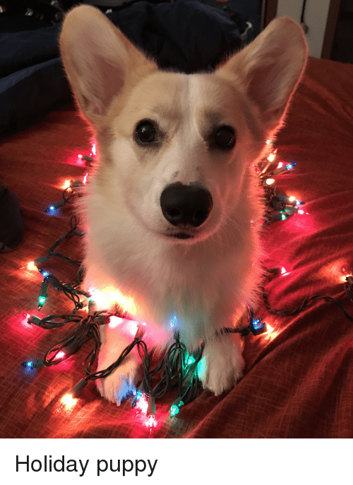 Puppy and Holiday: Holiday puppy