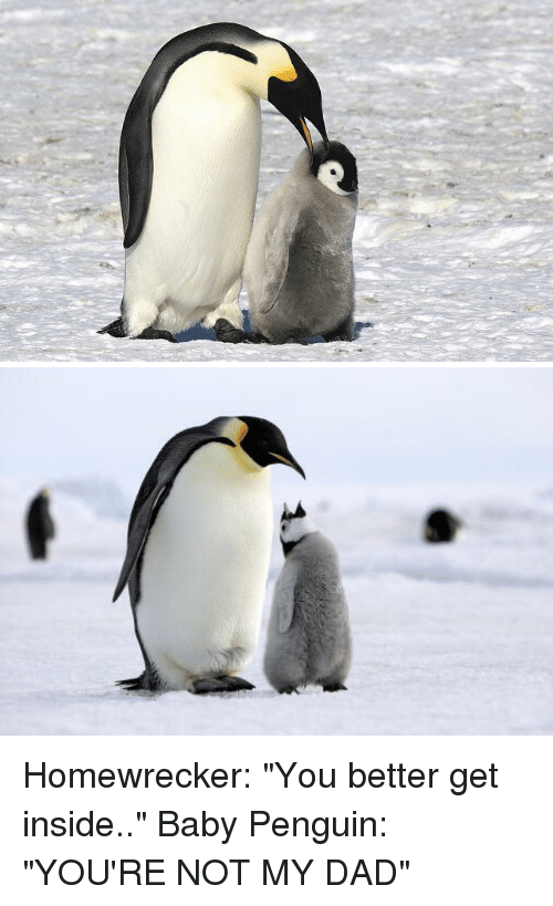"""Your Not My Dad: Homewrecker: """"You better get inside.."""" Baby Penguin: """"YOU'RE NOT MY DAD"""""""