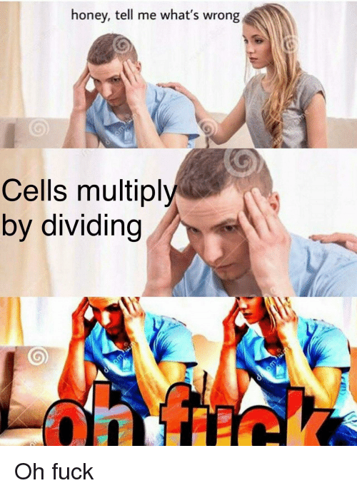 Fuck, Honey, and Whats: honey, tell me what's wrong  Cells multiply  by dividing Oh fuck