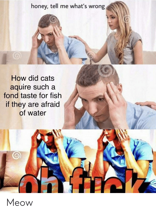 fond: honey, tell me what's wrong  d gm  How did cats  aquire such a  fond taste for fish  if they are afraid  of water  d m Meow
