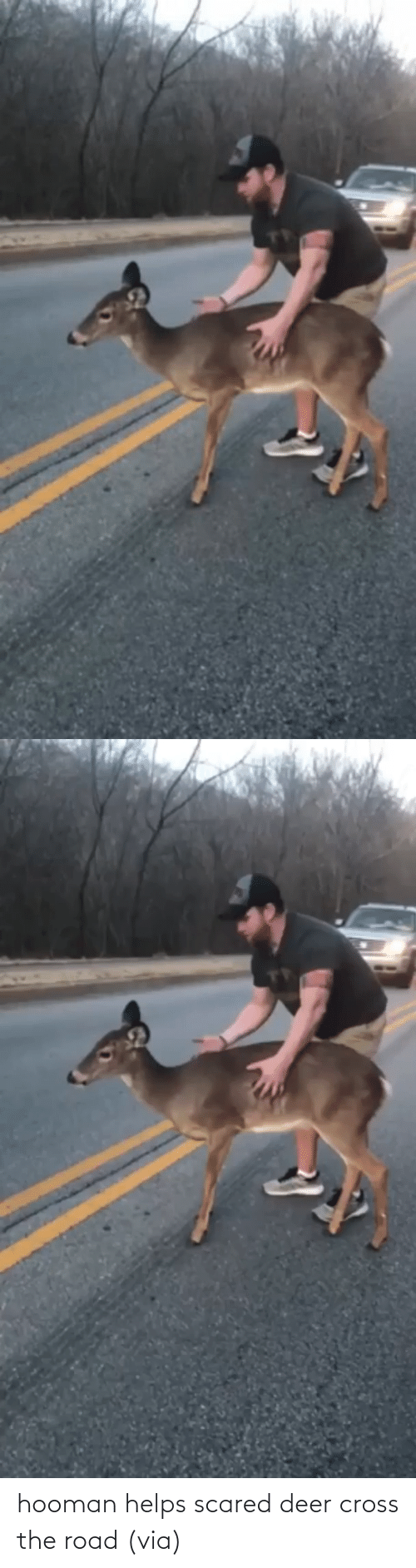 The Road: hooman helps scared deer cross the road (via)