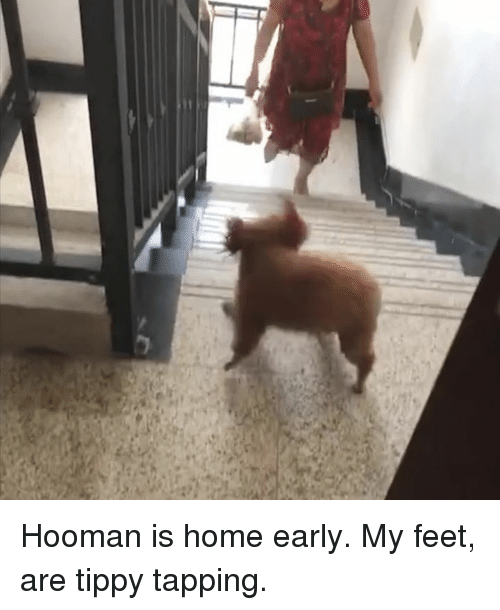 Dank, Home, and 🤖: Hooman is home early. My feet, are tippy tapping.