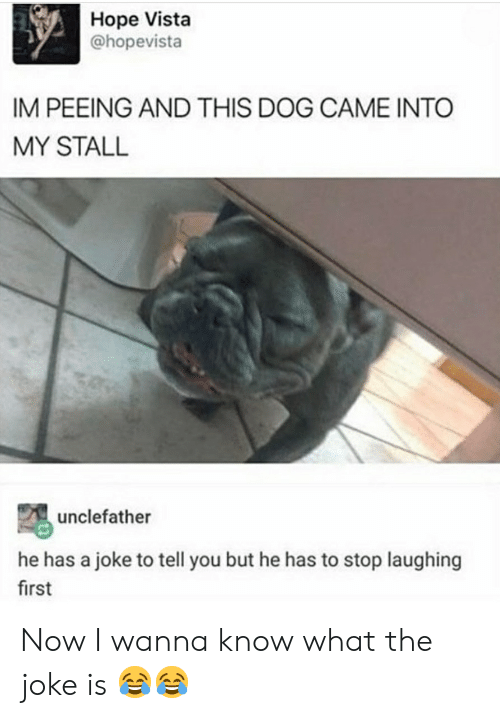 Hope, Wanna Know, and Dog: Hope Vista  @hopevista  IM PEEING AND THIS DOG CAME INTO  MY STALL  unclefather  he has a joke to tell you but he has to stop laughing  first Now I wanna know what the joke is 😂😂
