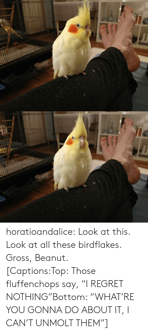 """Look At All These: horatioandalice:  Look at this. Look at all these birdflakes. Gross, Beanut.[Captions:Top:Those fluffenchops say, """"I REGRET NOTHING""""Bottom: """"WHAT'RE YOU GONNA DO ABOUT IT, I CAN'T UNMOLT THEM""""]"""