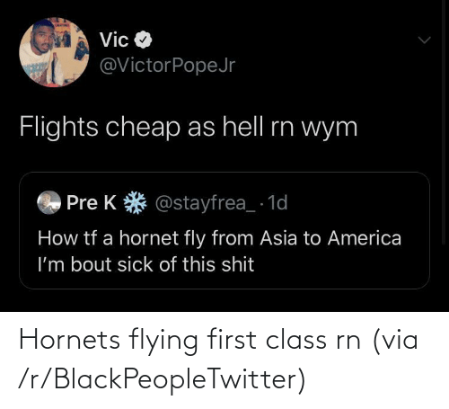 Flying: Hornets flying first class rn (via /r/BlackPeopleTwitter)