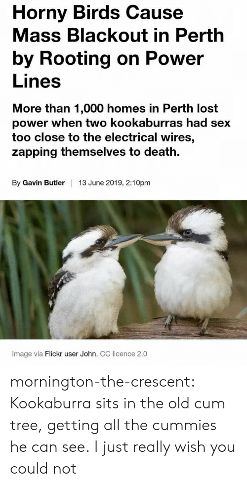butler: Horny Birds Cause  Mass Blackout in Perth  by Rooting on Power  Lines  More than 1,000 homes in Perth lost  power when two kookaburras had sex  too close to the electrical wires,  zapping themselves to death  By Gavin Butler  13 June 2019, 2:10pm  Image via Flickr user John, CC licence 2.0 mornington-the-crescent:  Kookaburra sits in the old cum tree, getting all the cummies he can see.  I just really wish you could not