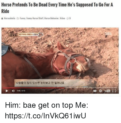 Bae, Funny, and Horse: Horse Pretends To Be Dead Every Time He's Supposed To Go For A  Ride  Horse aholic O Funny, Funny Horse Stuff. Horse Behavior. Video D9  14s/31s Him: bae get on top Me: https://t.co/InVkQ61iwU