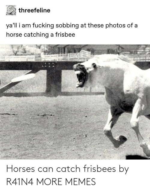 catch: Horses can catch frisbees by R41N4 MORE MEMES