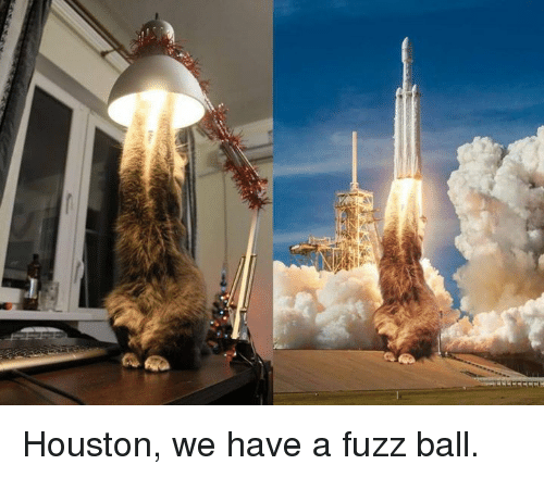 Dank, Houston, and 🤖: Houston, we have a fuzz ball.