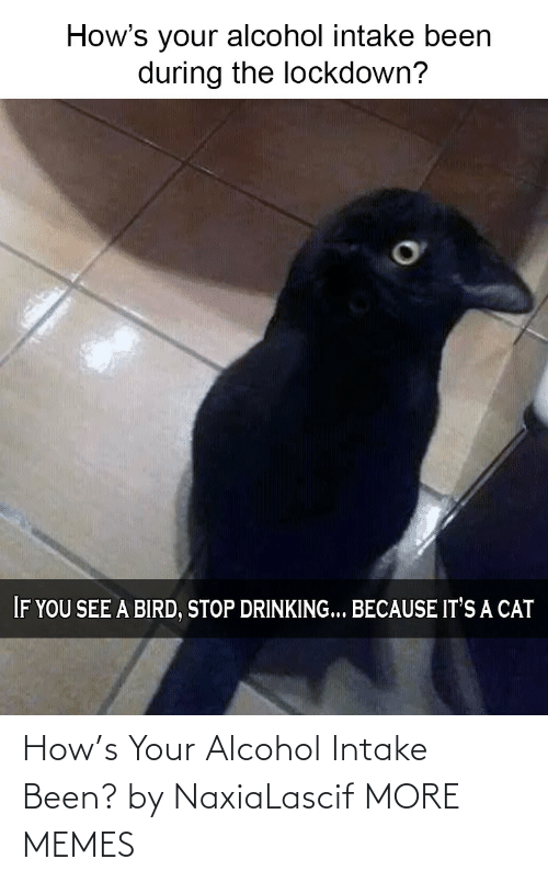 Alcohol: How's Your Alcohol Intake Been? by NaxiaLascif MORE MEMES