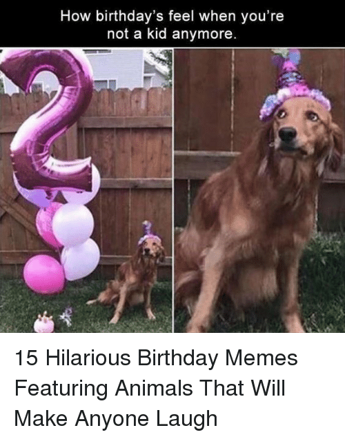 Animals, Birthday, and Memes: How birthday's feel when you're  not a kid anymore. 15 Hilarious Birthday Memes Featuring Animals That Will Make Anyone Laugh
