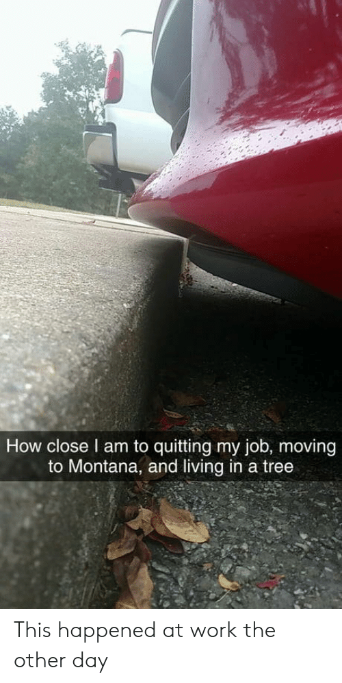 Montana: How close l am to quitting my job, moving  to Montana, and living in a tree This happened at work the other day
