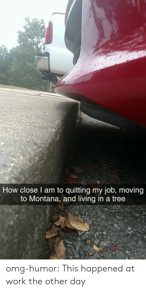 Montana: How close l am to quitting my job, moving  to Montana, and living in a tree omg-humor:  This happened at work the other day