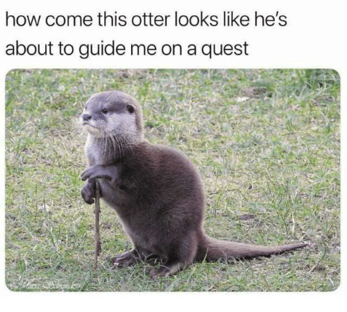 Dank, Quest, and 🤖: how come this otter looks like he's  about to guide me on a quest