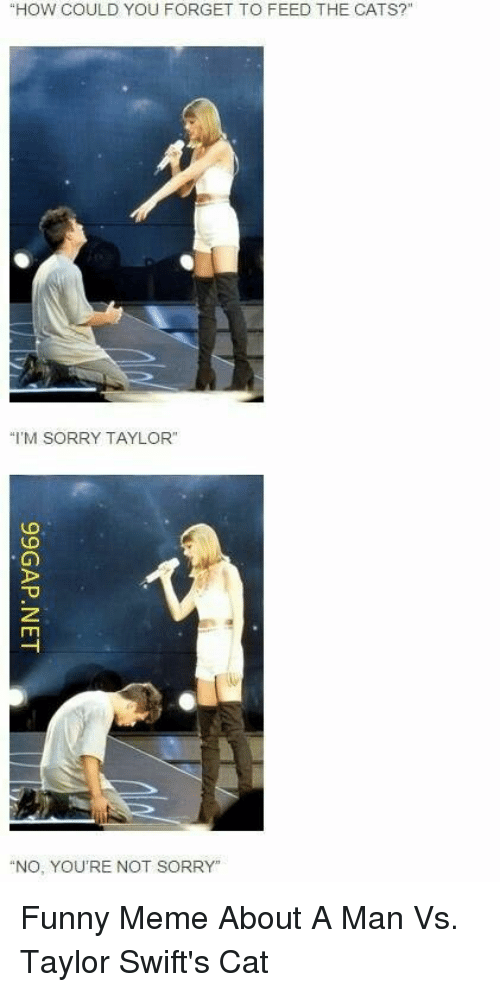 "Cats, Funny, and Meme: ""HOW COULD YOU FORGET TO FEED THE CATS?""  ""I'M SORRY TAYLOR""  ""NO, YOU'RE NOT SORRY"" Funny Meme About A Man Vs. Taylor Swift's Cat"