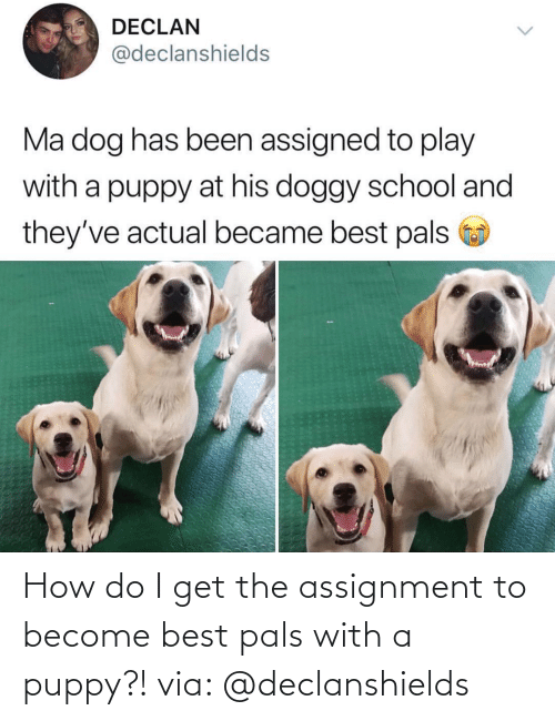 Do I: How do I get the assignment to become best pals with a puppy?! via: @declanshields