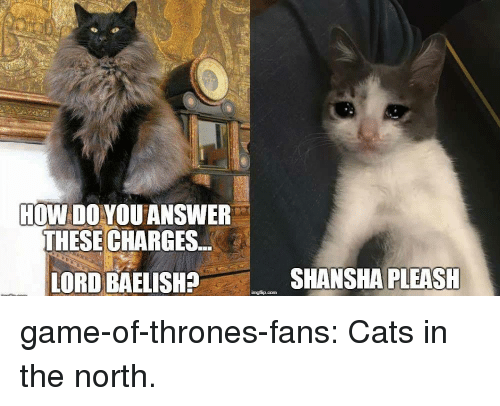 Cats, Game of Thrones, and Tumblr: HOW DO YOU ANSWER  THESE CHARGES  LORD BAELISH?  SHANSHA PLEASH game-of-thrones-fans:  Cats in the north.